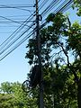 Arad elektriciteit 2017 1.jpg