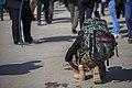 Arba'een Pilgrimage In Mehran, Iran تصاویر با کیفیت از پیاده روی اربعین حسینی در مرز مهران- عکاس، مصطفی معراجی - عکس های خبری اربعین 124.jpg