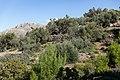 Archangelos Αρχάγγελος Rhodes Ρόδος 2019-11-27 02 olive grove.jpg