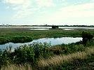 Assateague Wetlands.jpg