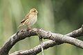 Austin Roberts Bird Sanctuary-051.jpg