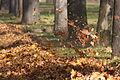 Autumn.jpg