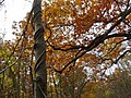 Autumn - panoramio (66).jpg