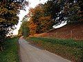 Autumn Leaves near Avebury - geograph.org.uk - 67054.jpg