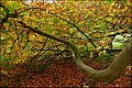 Autumn at Rabbit Hill, Ballymena (2) - geograph.org.uk - 581959.jpg