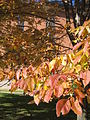 Autumn at the Chapel of the Resurrection 01.JPG