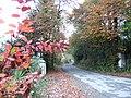 Autumnal scene - Garryvarren, Co. Wexford - geograph.org.uk - 631789.jpg