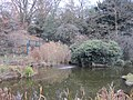 Avenue House Grounds pond.JPG