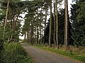 Avenue of Trees at Great Farm - geograph.org.uk - 59464.jpg
