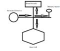 Axon Reflex Drawing.png