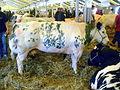 BBW fôre Libråmont bleuwe vatche.JPG