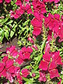 BCBG Flowers 09.JPG
