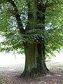 Bad-homburg-kurpark-flora-0125.jpg