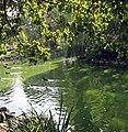 Bad Rothenfelde, Park Teich, Ausschnitt.JPG