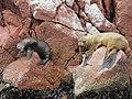 Ballestas Islands, Peru - panoramio (2).jpg