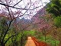 Bamei Village - panoramio (6).jpg