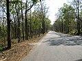 Bandipur Tiger Reserve - panoramio (23).jpg