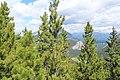 Banff Gondola IMG 4122.JPG