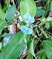 BangladeshiFlower9.jpg