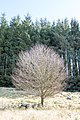 Bare tree near Loch Derry on Southern Upland Way - panoramio.jpg