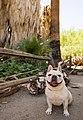Bark Ranger on the Oasis of Mara Trail (42132162572).jpg