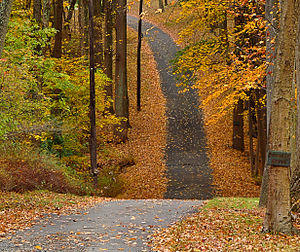 A walking trail in Basking Ridge