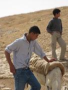 Bedouins IMG 1706.JPG