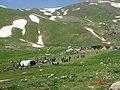 Berçelan Festıvals 01.06.2009 - panoramio.jpg