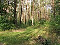 Berkovets forest2.jpg