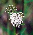 Biały kwiat 532.jpg