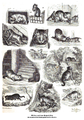 Bilder aus dem Katzenleben, von Otto Speckter.png