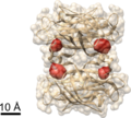 Biotin binding sites in streptavidin determined using COLD.png