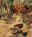 Bird-lore (1920) (14564060878).jpg