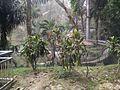 Bird Park in Kuala Lumpur (Malaysia) (40).jpg