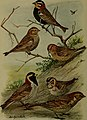 Bird lore (1910) (14755509145).jpg