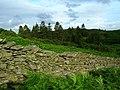 Birkmoss Plantation - geograph.org.uk - 507320.jpg