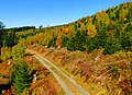 Black Forest In Autumn - panoramio.jpg