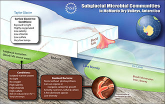 Blood Falls - A schematic cross-section of Blood Falls showing how subglacial microbial communities have survived in cold, darkness, and absence of oxygen for a million years in brine water below Taylor Glacier.