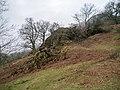 Blown over tree - panoramio.jpg