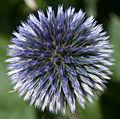 Blue Ball (7740293876).jpg