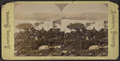 Blue Mountain Lake, from Merwin's. New York State, from Robert N. Dennis collection of stereoscopic views.png