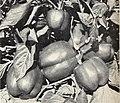 Bolgiano's spring 1967 catalog (1967) (20391171775).jpg