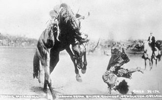 National Cowgirl Museum and Hall of Fame - A 1915 photograph by Walter S. Bowman of Bonnie McCarroll being thrown from a horse named Silver at the Pendleton Round-Up (Part of the National Cowgirl Museum and Hall of Fame photography collection)