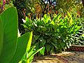 Botanička bašta Jevremovac, Beograd - jesenje boje, svetlost i senke 23.jpg