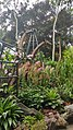 Botanical Garden Singapore (38445564624).jpg