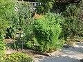 Botanical garden of Padua 105.jpg