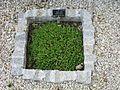 Botanische tuin - Sofia (4759496481).jpg