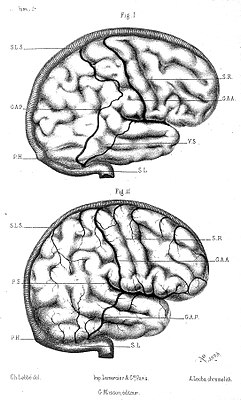 Brain; circulation of the veins. Wellcome L0007194.jpg