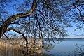Branches (4560125696).jpg