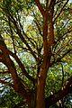 Branches of boredom (3464581412).jpg